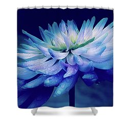 Midnight Dahlia And Drops Shower Curtain by Julie Palencia