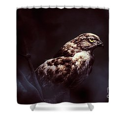 Midnight Hawk Shower Curtain
