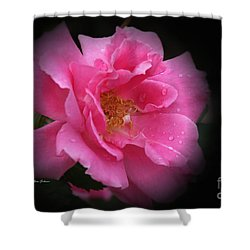 Midnight Rose Shower Curtain by Yumi Johnson