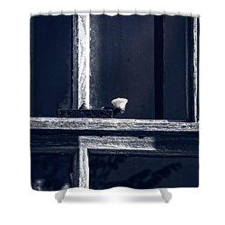 Midnight Window Shower Curtain