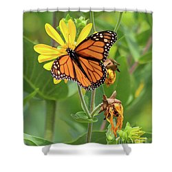 Mighty Monarch   Shower Curtain
