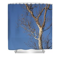 Mighty Tree Shower Curtain
