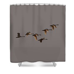Migrating Swans Shower Curtain