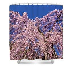 Shower Curtain featuring the photograph Miharu Takizakura Weeping Cherry30 by Tatsuya Atarashi