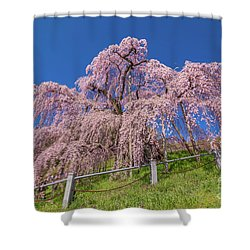 Shower Curtain featuring the photograph Miharu Takizakura Weeping Cherry0565 by Tatsuya Atarashi