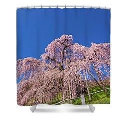 Shower Curtain featuring the photograph Miharu Takizakura Weeping Cherry32 by Tatsuya Atarashi