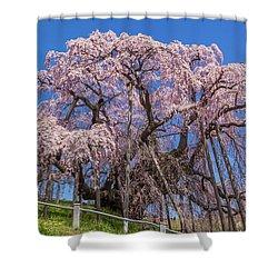 Shower Curtain featuring the photograph Miharu Takizakura Weeping Cherry55 by Tatsuya Atarashi