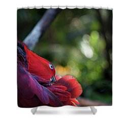 Miksang 4 Parrot Shower Curtain by Theresa Tahara