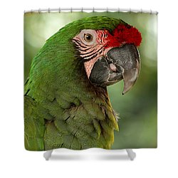 Military Mccaw Shower Curtain by Sheila Brown