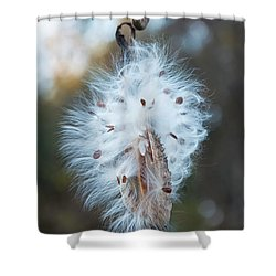 Shower Curtain featuring the digital art Milkweed And Its Seeds by Chris Flees