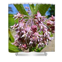 Milkweed Beauty Shower Curtain