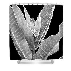 Shower Curtain featuring the photograph Milkweed Black And White by Christina Rollo