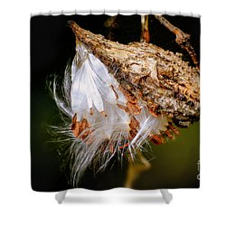 Shower Curtain featuring the photograph Milkweed by Brenda Bostic