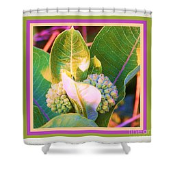 Milkweed Buds Shower Curtain