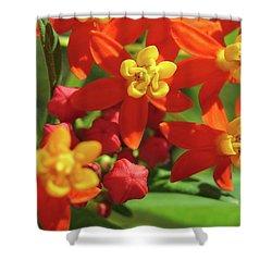 Milkweed Flowers Shower Curtain by Melinda Saminski