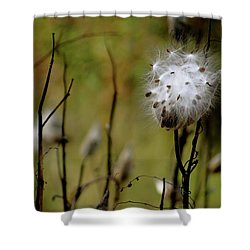 Milkweed In A Field Shower Curtain