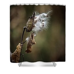 Milkweed Plant Dried And Blowing In The Wind Shower Curtain