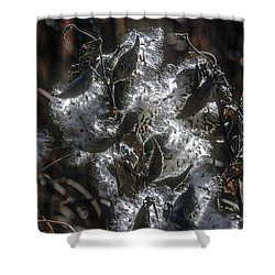 Milkweed Plant Dried Seeds  Shower Curtain