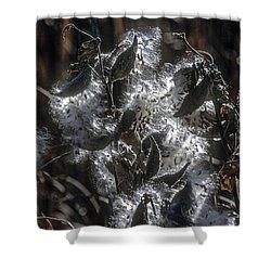 Milkweed Plant Dried Seeds  Shower Curtain by John Brink