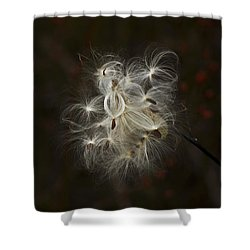Milkweed Pod Shower Curtain by Elsa Marie Santoro