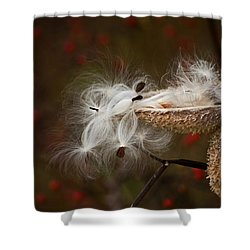 Milkweed Pods Shower Curtain by Elsa Marie Santoro