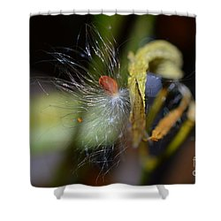 Shower Curtain featuring the photograph Milkweed Seed by Lew Davis
