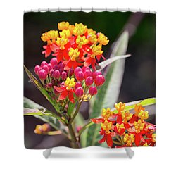 Milkweed Silky Deep Red Shower Curtain by Louise Heusinkveld