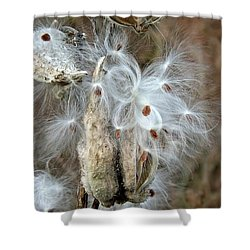 Milkweeds Seeds  Shower Curtain by Christy Ricafrente