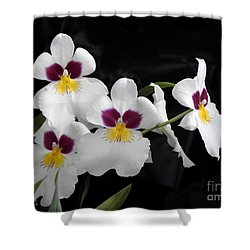 Miltonia Hybrid Orchid Shower Curtain by Scott Cameron