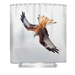 Shower Curtain featuring the photograph Milvus Milvus by Grant Glendinning