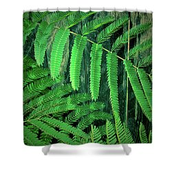 Mimosa Tree Shower Curtain