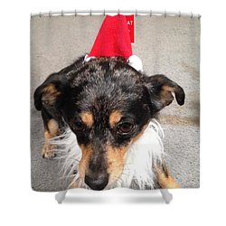 Shower Curtain featuring the photograph Miha  Holiday by Erika Chamberlin