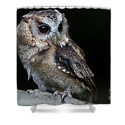 Minature Owl Shower Curtain