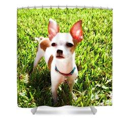 Mini Dog Shower Curtain