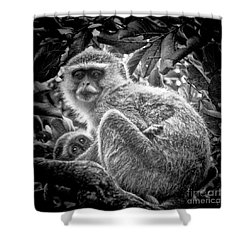 Mini Me Monkey Shower Curtain