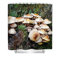 Mini Mushroom Landscape Shower Curtain