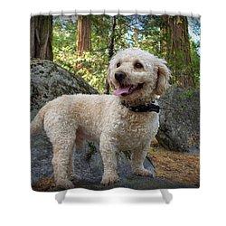 Mini Poodle Shower Curtain