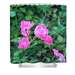 Mini Roses Shower Curtain by John Parry