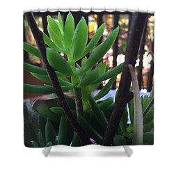 Mini Succulent  Shower Curtain by Russell Keating