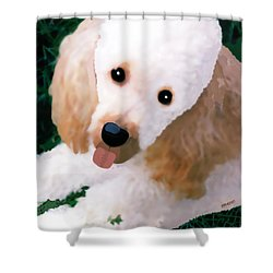 Miniature Poodle Albie Shower Curtain by Marian Cates