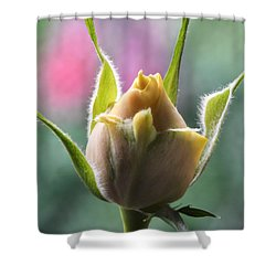 Miniature Rose Bud. Shower Curtain