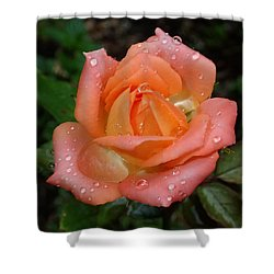 Miniature Wet Rose Shower Curtain