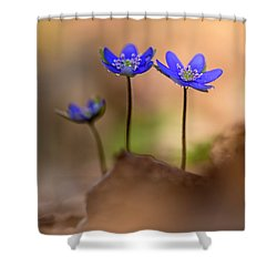 Shower Curtain featuring the photograph Minimalistic Impresion With Liverworts by Jaroslaw Blaminsky