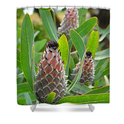 Mink Protea Flower Shower Curtain by Rebecca Margraf