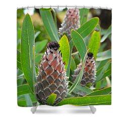 Mink Protea Flower Shower Curtain