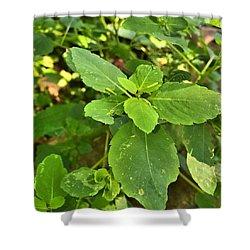 Minnesota Plant Life Shower Curtain