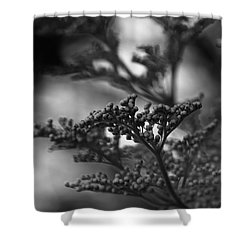 Mirrored In Sterling Shower Curtain by Linda Shafer
