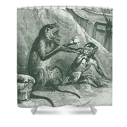 Mischievous Monkey Shower Curtain