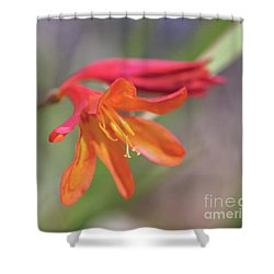 Shower Curtain featuring the photograph Misplaced Beauty by Linda Lees