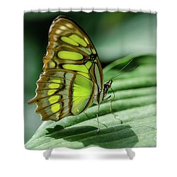Miss Green Shower Curtain